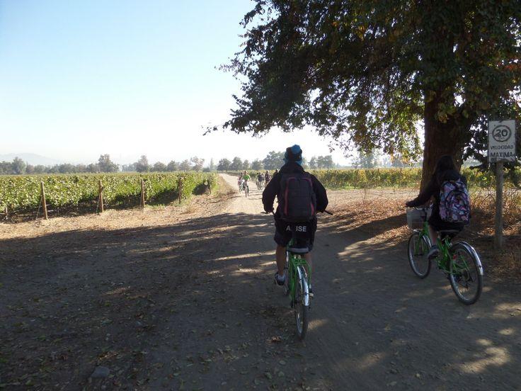 Visitamos la viña y montamos bicicletas. Probamos las uvas y un poco de vino. Montamos las bicicletas alrededor de la viña. Después vimos como el vino se hace y fuimos a la bodega.