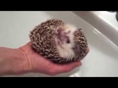 video lucu binatang: funny animals stupid cat