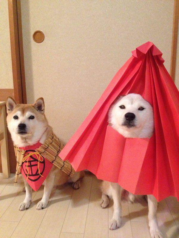 """darylfranz: """"柴犬の妖怪写真が可愛すぎるwwwwwwwwwwwwww - ハムスター速報 """""""