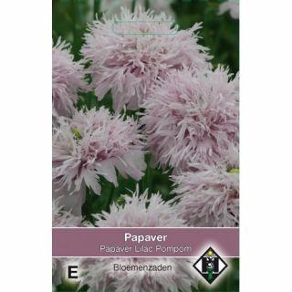 Papaver somniferum Lilac Pompom (zaad Klaproos met zacht lilapaarse bloemen)