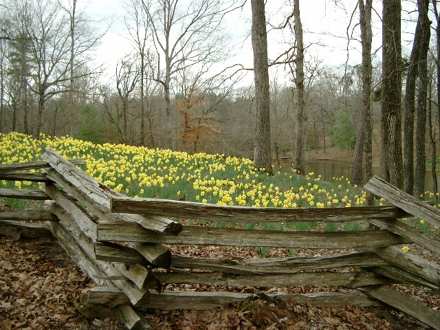 25 unique natural fence ideas on pinterest when is for Natural privacy fence