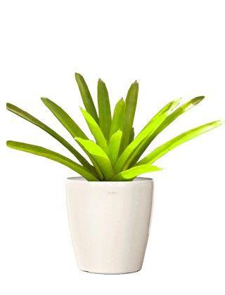 Best 25+ Buy indoor plants online ideas on Pinterest | Growing ...