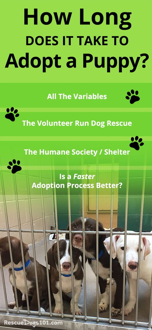How Long Does It Take To Adopt A Dog? | Dogs and kids, Dog ...