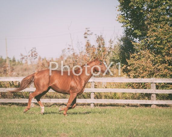 Stride of a horse Digital Download by PhotoX1 on Etsy