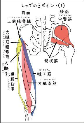 タイマッサージの解剖学