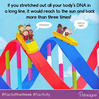 #Factoftheweek from 'Journey Around And Inside Your Amazing Body', part of our 'Factivity' series.