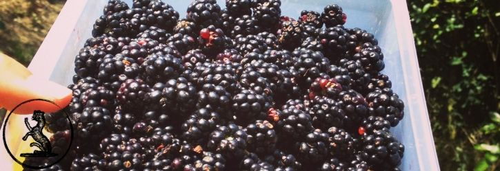 Blackberries, benefits, skin food, skincare