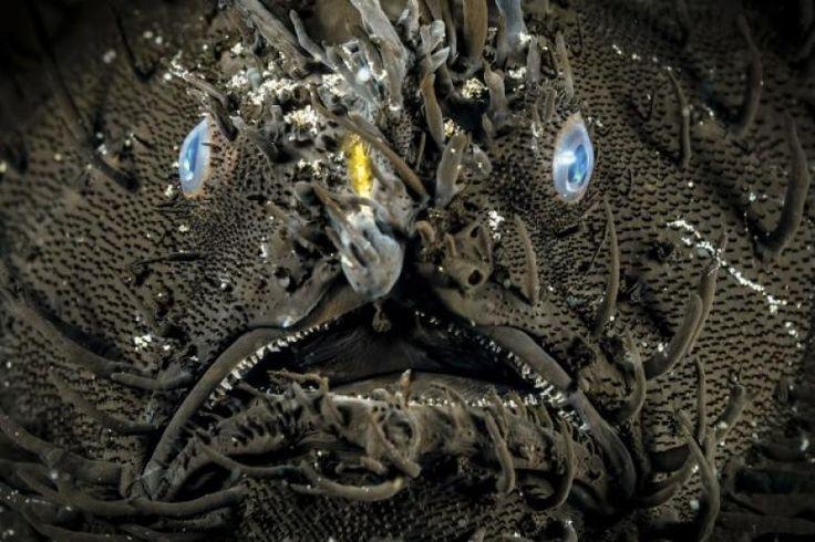 Doğanın Korkutucu Yüzü Olan Hayvanlar
