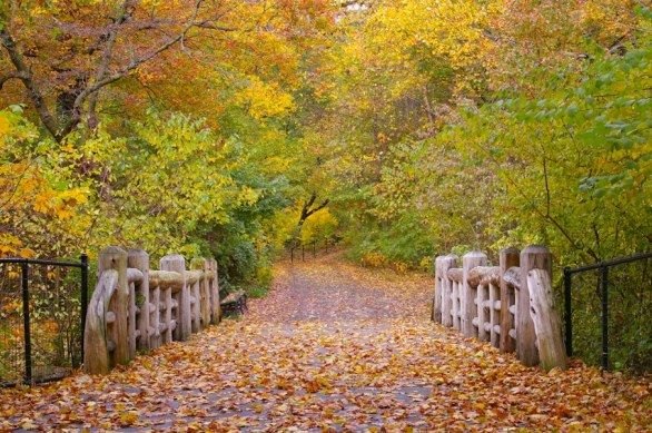 The nature in New York: Prospect Park, Brooklyn