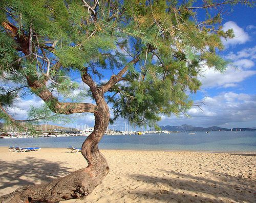 THE BEAUTY OF PUERTO POLLENSA