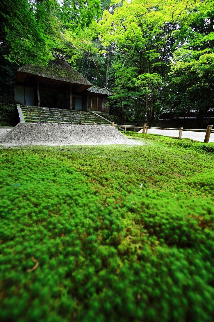 京都法然院の苔と山門のタイムスリップしたような境内 Honen-in, Kyoto