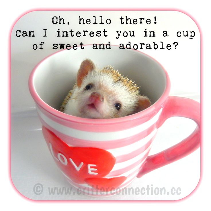 Oh, hello there! Can I interest you in a cup of sweet and adorable?