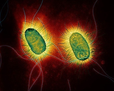 Beautiful Bacteria ;)
