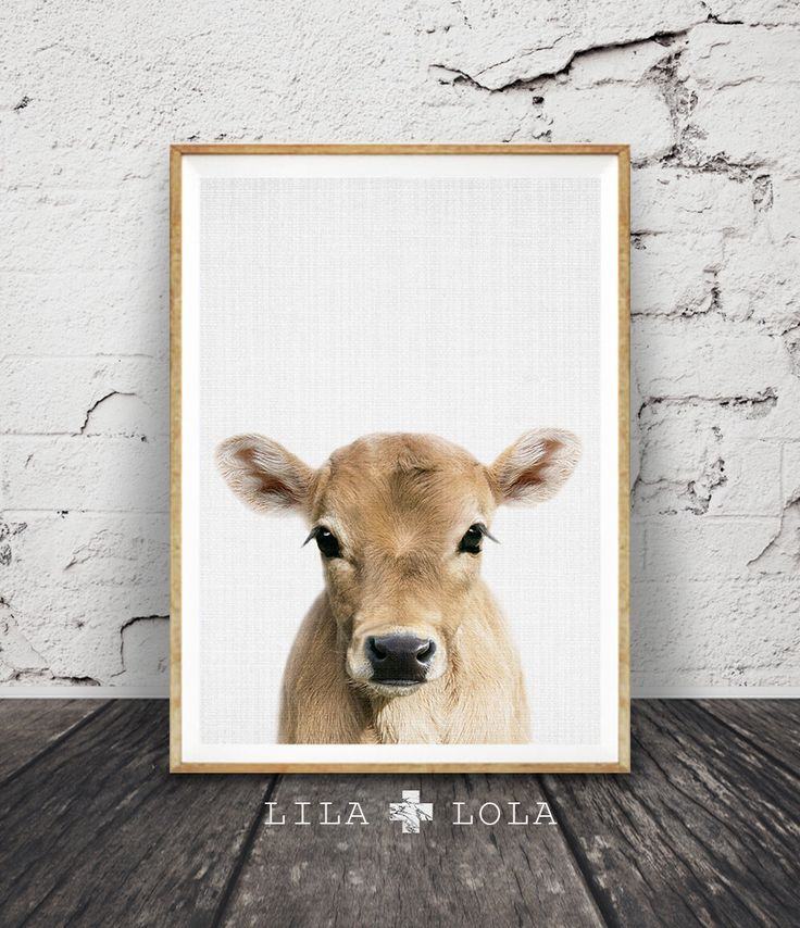 Calf Print, Baby Cow Farm Animal Wall Art, Nursery Decor, Large Printable Poster Digital Download, Farmhouse Decor, Colour Photo Babies Room by LILAxLOLA on Etsy https://www.etsy.com/listing/487086800/calf-print-baby-cow-farm-animal-wall-art