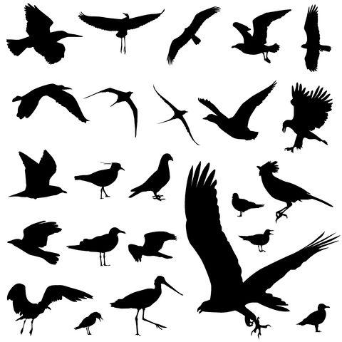 bird tattoo designs tattoo inspiration pinterest design design bird silhouette tattoos. Black Bedroom Furniture Sets. Home Design Ideas
