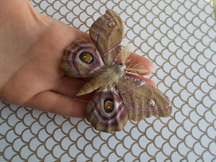 Best 25 Brown Moth Ideas On Pinterest  Butterfly Wings Huge Interesting Small Moths In Bathroom Design Ideas