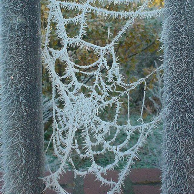 Frozen spider web