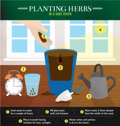 Simple Kitchen Herb Garden best 25+ kitchen herb gardens ideas on pinterest | kitchen herbs