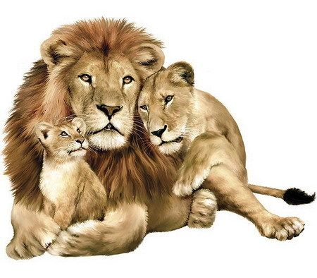 Lion family                                                                                                                                                                                 More