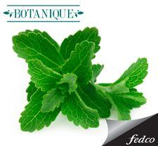 Los componentes botánicos ayudan a una reducción constante y uniforme. http://bit.ly/GelReductorNarcisseBotanique