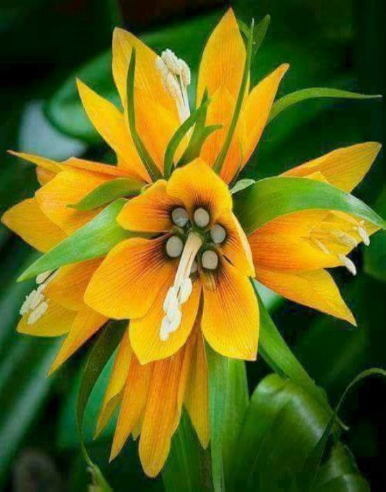 19 Exotic Types Of Tropical Flowers For Home Decorations Various