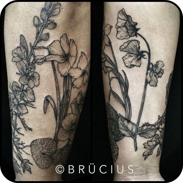 #BRÜCIUS #TATTOO #SF #SanFrancisco #brucius #natural #science #engraving #etching #sculptoroflines #dotwork #blackwork #penandink #lines #dotwork #Sweatpea #larkspur #narcissus #violet  #ranunculus #inprogress