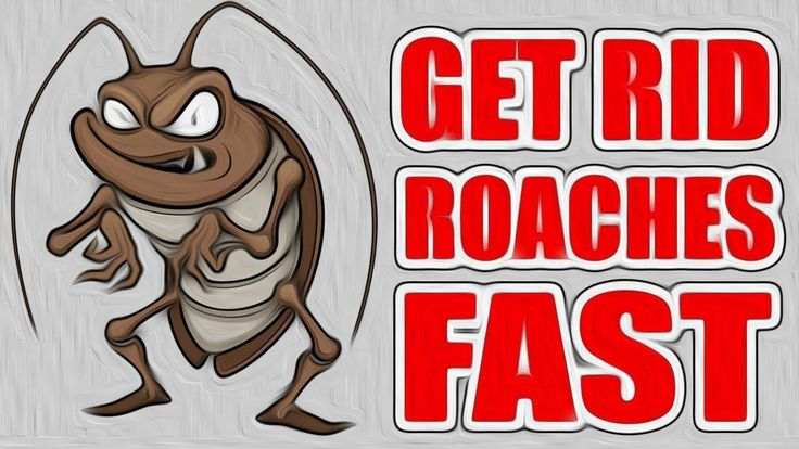 12 most effective ways on how to get rid of roaches fast