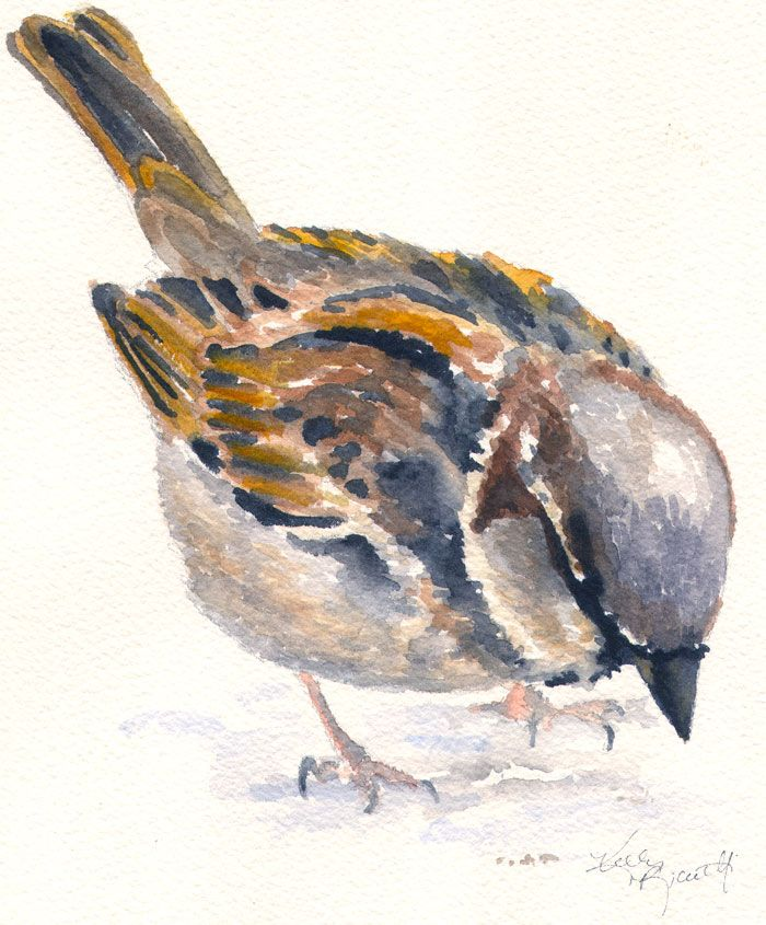 paintings of sparrows - Google Search