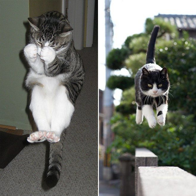 flying cat11