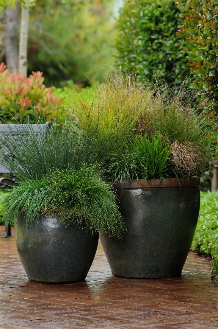 A mix of Carex—including 'Red Rooster,' 'Bronzier,' and 'Buffalo Gold'—along with Juncus 'Blue Arrows' and Isolepsis 'Live Wire' burst from these fall planters. Photographs courtesy of Ball Horticultural.Gardenista