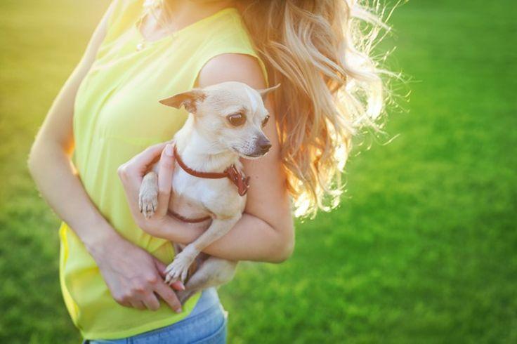 Vous hésitez entre un caniche nain et un bichon maltais? Découvrez leurs caractère et celui de 8 autres petites races de chien.