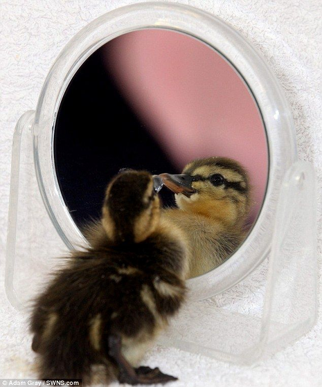 ducky almost died of lonliness, saved by a mirror.  HOORAY!!!