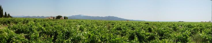 Panorama from Rochude (Vaucluse), view Denteilles de Montmirail & Mont Ventoux, Provence, France. 2012
