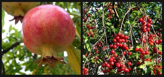 Le jardin autonome, permaculture et vie en autarcie: Le jardin forestier, un écosystème nourricier