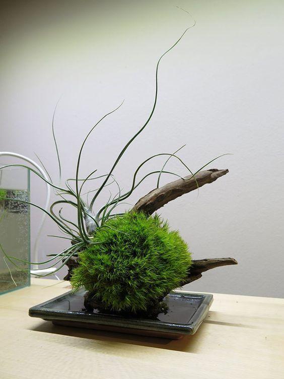 art floral japonais kokedama sphere mousse soucoupe plate kokedamas