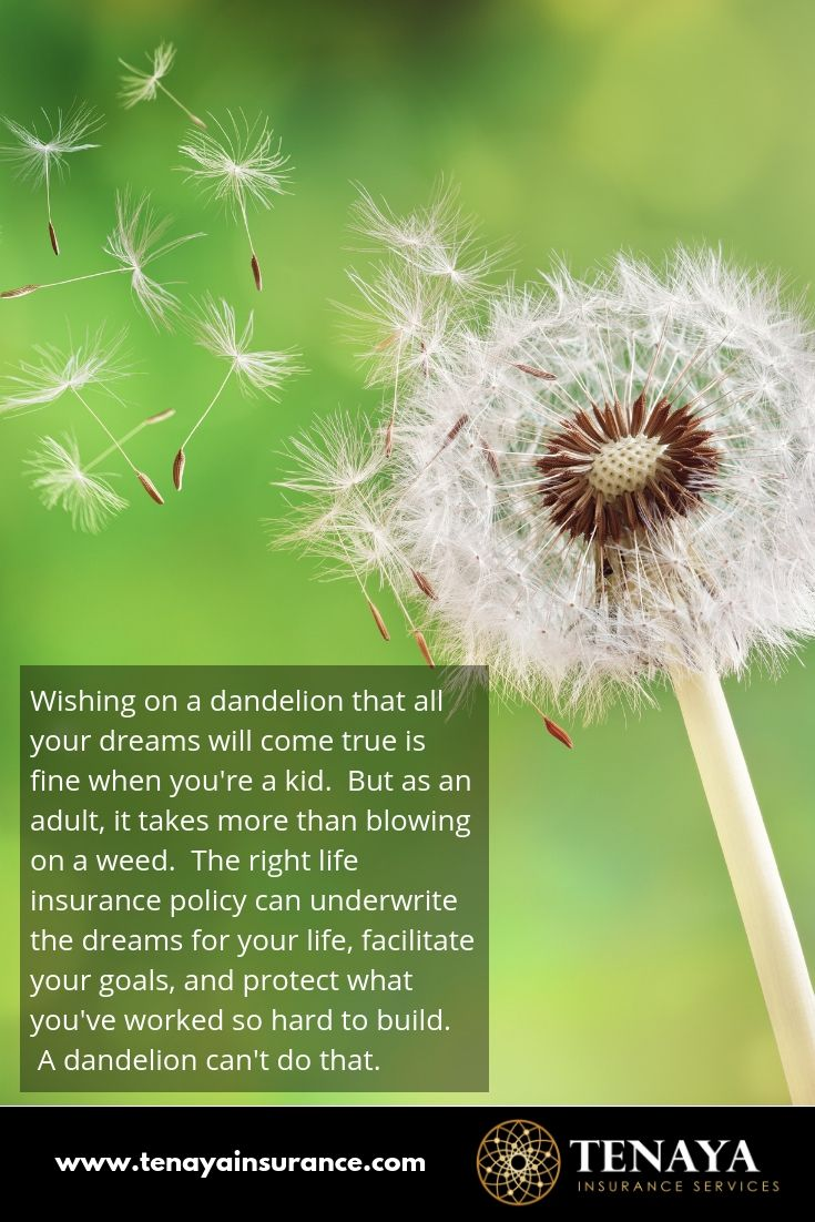 Wishing On A Dandelion That All Your Dreams Will Come True Is Fine