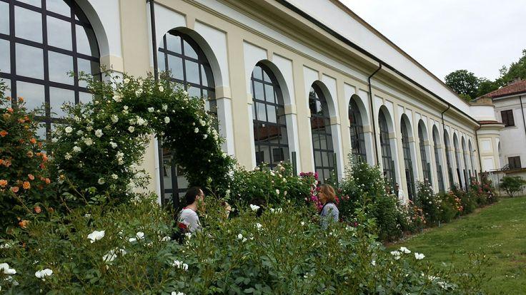 Roseto Villa Reale del parco  di Monza