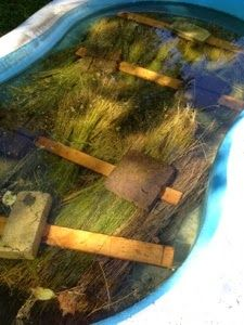Retting Flax in an Inflatable Kiddie Pool