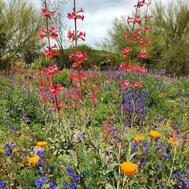 Where to See Wildflowers in Phoenix | The Hot Sheet Blog by Visit Phoenix