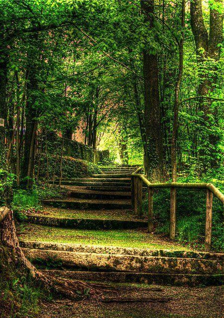 Tree Lined: Green, Outdoor, Beautiful, Place, Walk, Garden, Step