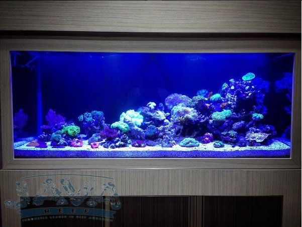 dekorasi aquarium air laut
