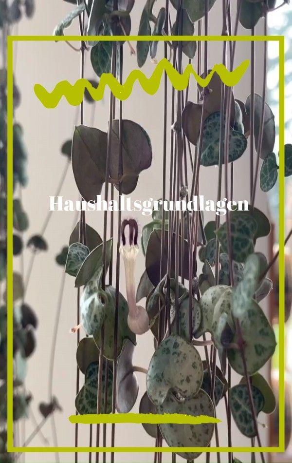 Verwandeln Sie Ihr Badezimmer In Ein Tropisches Paradies Mit Zimmerpflanzen Die Hohe Luftfeuchtigkeit Im Durchschnittli In 2020 Plants Planting Succulents Plant Guide