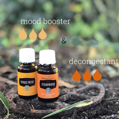A great Fall blend. Essential oils for uplifting your mood and a decongestant. Citrus Fresh and Cedarwood bring a citrus yet outdoor woodsy scent that help you breathe and lift your spirits. Young Living