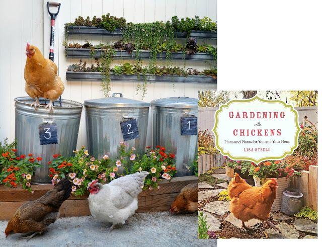 Using Chicken Manure In The Garden Chicken Manure Chickens