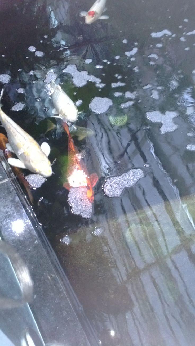 Kalojakin löytyi