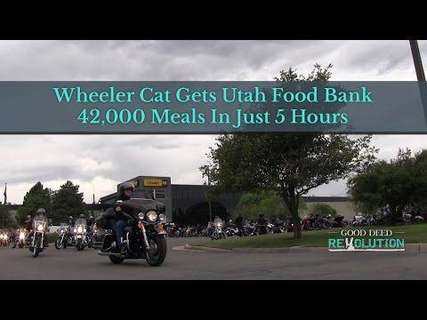 Wheeler Cat Gets Utah Food Bank 42,000 Meals In Just 5 Hours – Good Deed Revolution