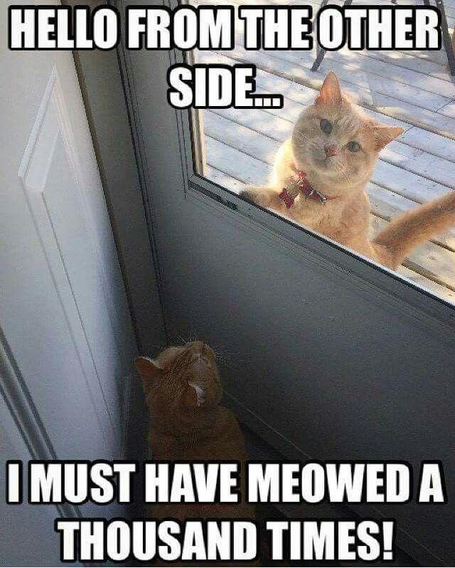 Hello Adele Cat Memes