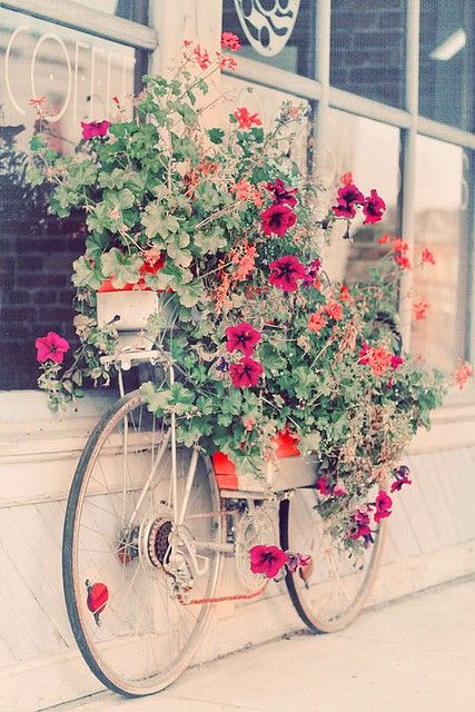 Bicycle Flower Box. DIY.: Stores Front, Idea, Flowers Pots, Second Chances, Old Bike, Flowers Planters, Flowers Boxes, Paris Hotels, Bicycle