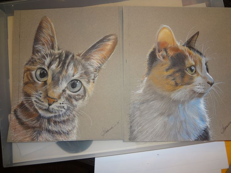 Portrait drawing - Funny cats...Prismacolor
