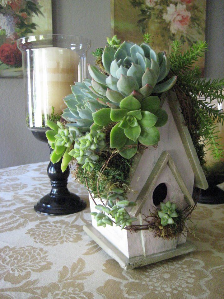 Beautiful Birdhouse with Succulents
